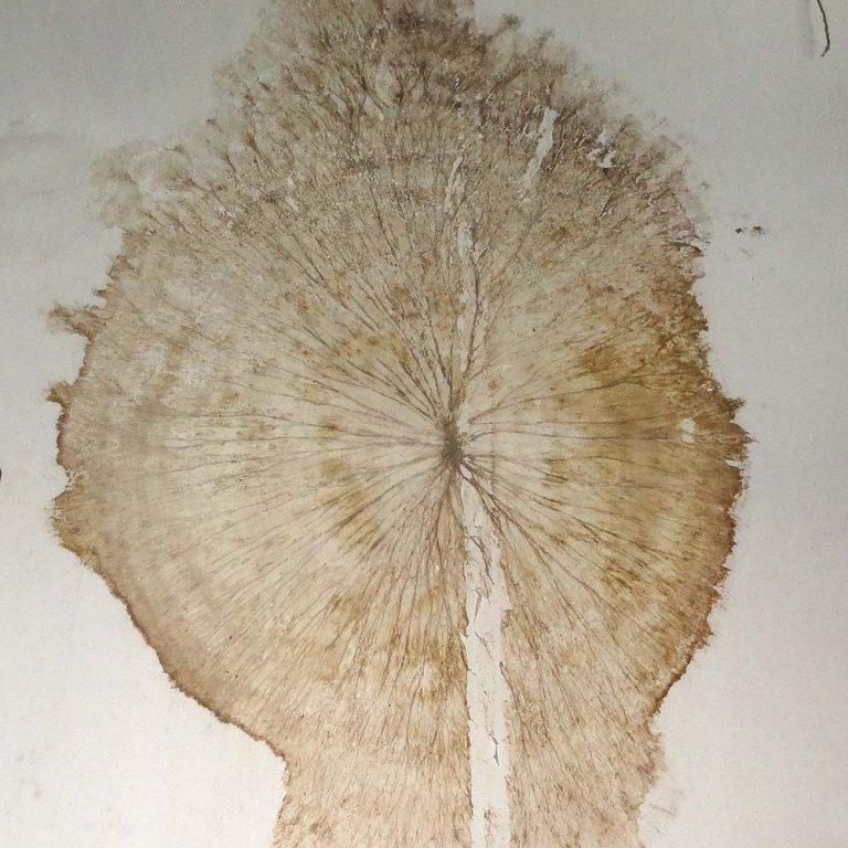 mycélium de mérule